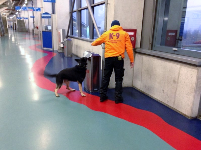 Stadionkontrolle mittels Sprengstoffspürhund