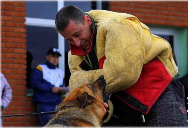 Praxis Seminar für Schutzdiensthelfer Diensthundführer international